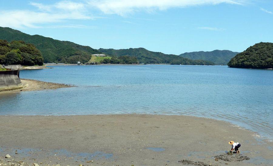 貝を掘る久川緑さん。「この環境がいかに独特で豊かであるか知ってほしい」(須崎市の浦ノ内湾)